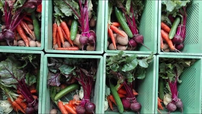 Ernährungsräte und Lebensmittelproduktion