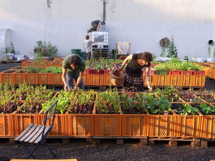 Stuttgart geht voran und schafft Position des Gartenkoordinators